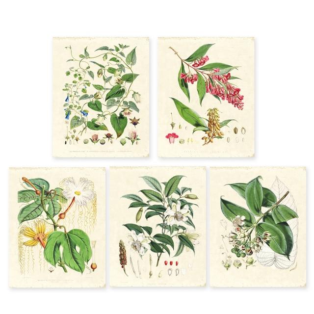 Vert plantes ensemble de 5 Vintage illustrations Botaniques, art floral imprime HD impression Fleur Wall Art tirages seulement sans cadre 2