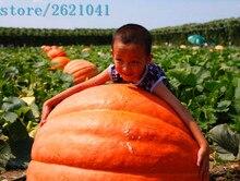 Hot selling 30 pcs/bag Atlantic Giant Pumpkin Seeds Vegetable Fruit Gardening non-GMO Plants Decor DIY Home