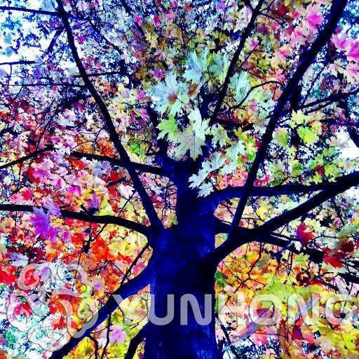 100 حقيبة نادر قوس قزح الكافور deglupta مبهرج الاستوائية شجرة شجرة النباتية لل حديقة زراعة الطفل ومحب مثل نادر شجرة بونساي