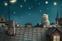Persian White Cat Kitten Fairytale Fantasy Roof House Sky Night Stars Moon Cities Fantasy Cloth Silk