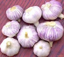 100 Pcs / Bag Sterilization Vegetable Seeds Giant Garlic China Green Onion Tasty Leek Seeds Big Potted Onion Garden Bonsai Plant