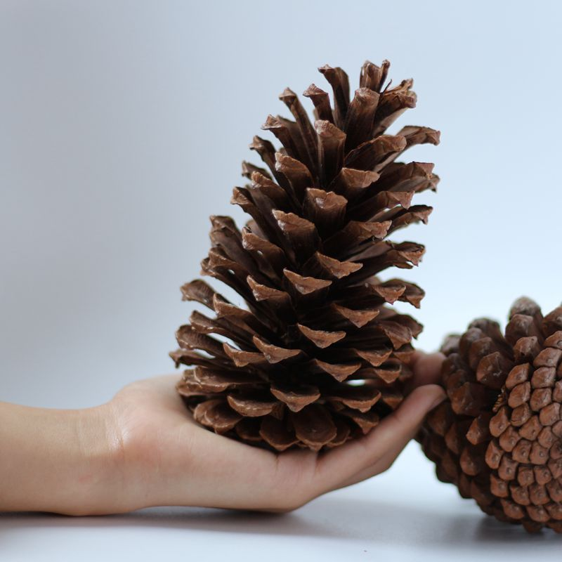 2pcs Natural Pine Cones Xmas Tree Ornaments Decorative