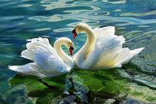 swan,full diamond embroidery,painting rhinestones,diamond painting swan