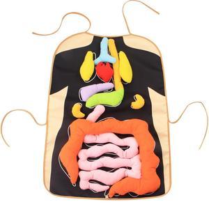 Монтессори игрушки тело органа Фартук модель juguetes Монтессори материалы образовательные игрушки для детей преподавание биологии Aids oyuncak