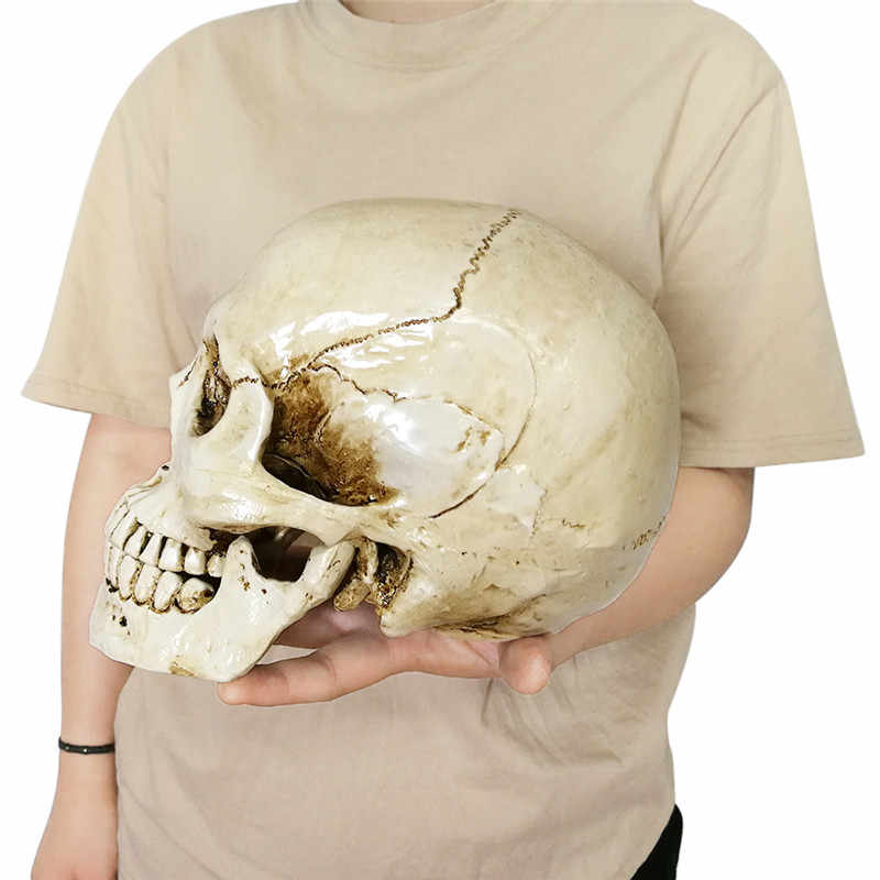 Human Head Resin Replica Medical Model Lifesize Halloween Home Decoration Decorative Craft Skull 22x15x17CM