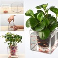 Crystal Cube Flower Pot Transparent Fish Tank Office Desktop Automatic Drip Irrigation Resin Plastic Plant Pot Planter
