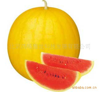 Beijing Xin Xi Orange watermelon 10seeds organic vegetable seeds ...