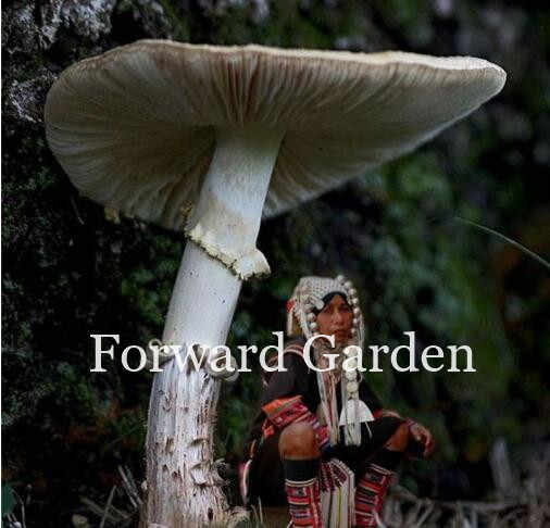 Delicious Gaint Mushrooms Bonsai, 100 Pcs Vegetable Rare Pleurotus Mushroom Strains Geesteranus Bonsai Easy Growing Diy Garden