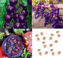 100 seeds Purple Cherry Tomatoes Seed Balcony Fruits Seed Vegetables Potted Bonsai Potted Plant Tomato Seeds