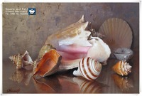 Conch Shell Sea Diamond Embroidery Diy Diamond Painting Embroidery Kit Mosaic Picture Of Rhinestones Home Decor