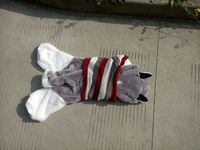 170cm Husky Dog Skin Plush Toys Teddy Bears Hull Large Animal Coat Factory Wholesale