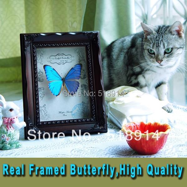 Hause Gerahmte Schmetterlinge Dekoration Echte Morpho Didius