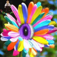 200 Pcs/bag Rainbow Chrysanthemum Seeds Rare Aster Bonsai Flower Seeds Perennial Indoor Plants Flowers Home Garden Daisy Seed