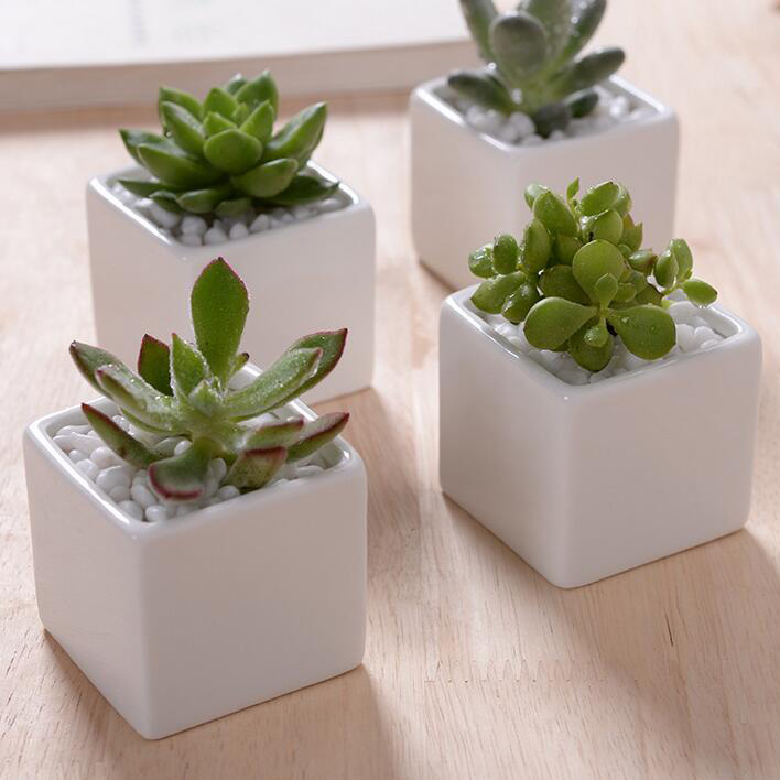 Aliexpress buy hot sale small indoor ceramic flowerpot aliexpress buy hot sale small indoor ceramic flowerpot rectangular bonsai pot desktop decor white ceramic planter for succulent garden supplies from mightylinksfo