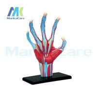 4D MASTER puzzle zabawki/ludzkiej dłoni 28 sztuk zestaw struktura montowane modelu anatomii Ludzkiej dłoni szkielet