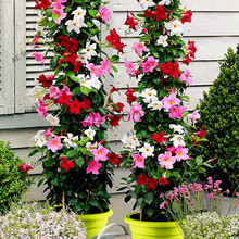 Buy  ower Potted Plant for Home Garden planting  online