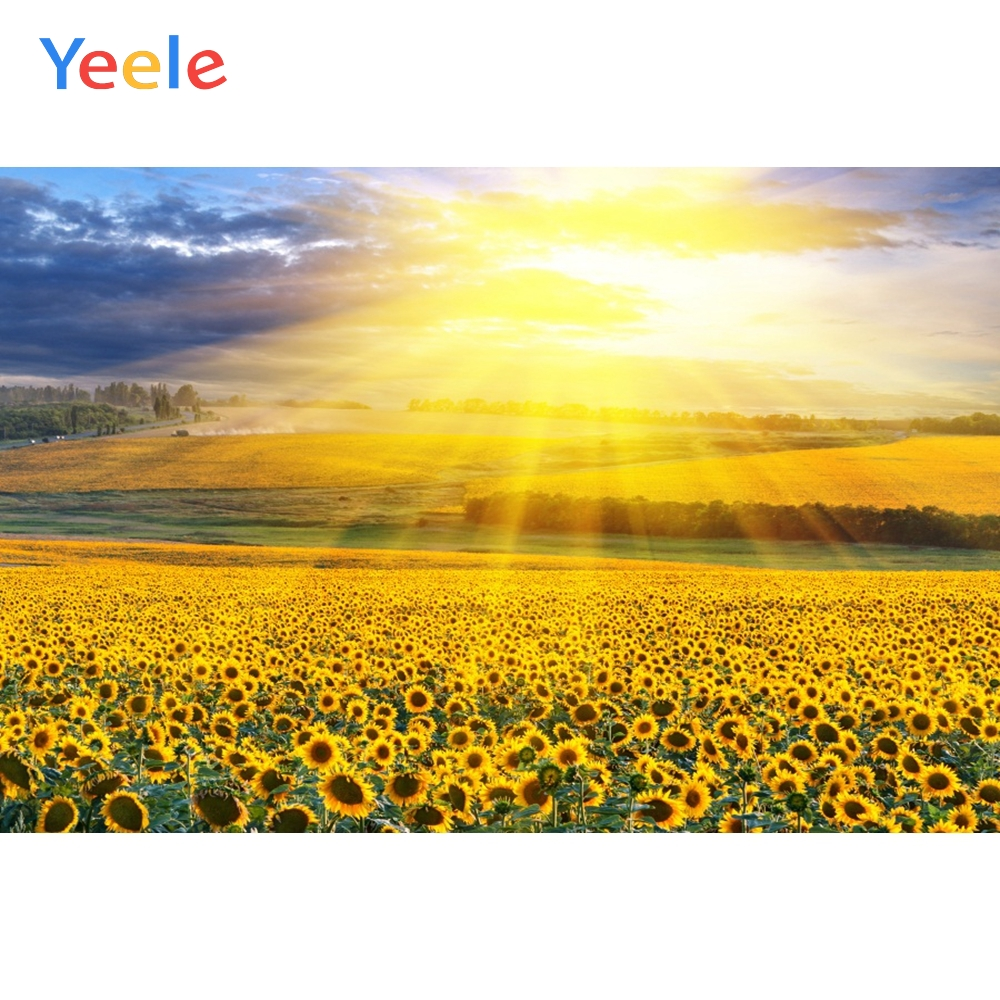 Yeele Blue Sky White Clouds Shine Sunflower Landscape Photography Backgrounds Photographic Customized Backdrops For Photo Studio
