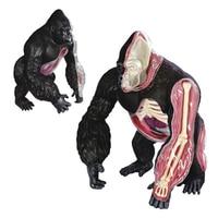 4D шимпанзе Модель Строительство Наборы съемный прозрачный гориллы сборки 29 шт. перспектива обучения игрушки для детей