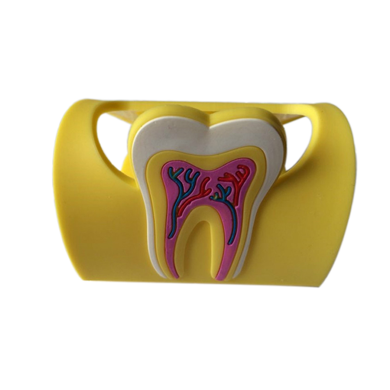1 Piece Dental Card Holder Rubber Molar Shaped Name Case Holder Case
