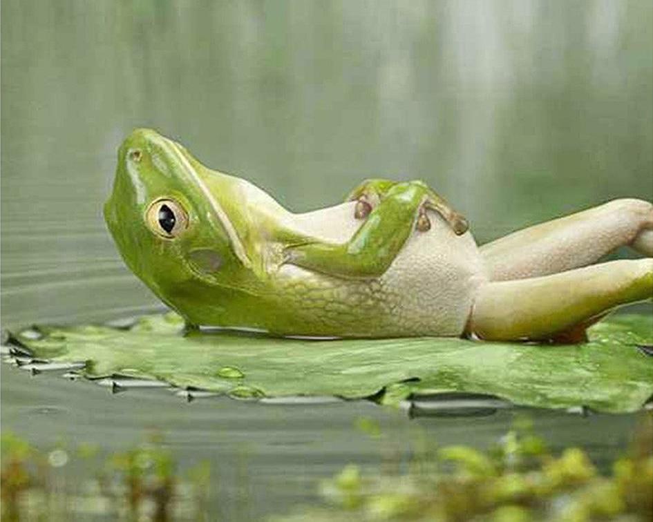 Diamond-Painting-Full-Square-round-Animal-Meditating-Frog-Lotus-Leaf-DIY-3D-Diamond-Embroidery-Pond-Green.jpg