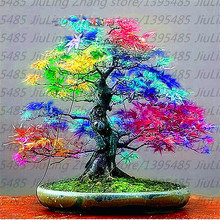 20Pcs/pack Japanese Red Maple Seeds Rare Rainbow Color Very Beautiful Japan Plants New Seeds Garden Watch Bonsai Tree