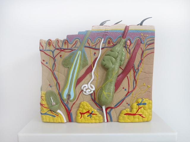 70 vezes Grande estrutura da pele modelo de anatomia Clínica da pele Cosméticos modelo decoração Especial personalizado Figuras decorativas