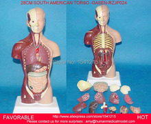 HUMAN TORSO MODEL,FAMALE/MALE TORSO WITH INTERNAL ORGANS,ANATOMICAL MODEL,HUMAN ANATOMY MEDICAL TRAINING MODEL-GASEN-RZJP024