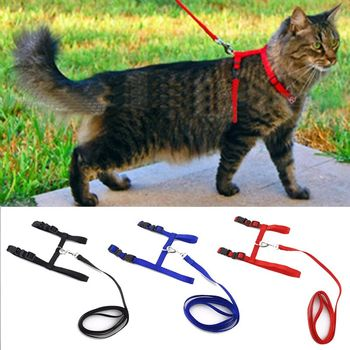 cat lead and harness