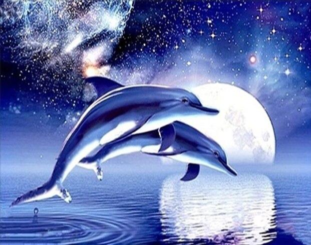 Killer Whale Hd Wallpaper 24x20cm Diy Full Drill Diamond Painting Cross Stitch