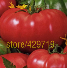 200 ШТ. большой красный семена помидоров, горшках семена овощных культур Сан Марцано помидоры, фамильные Свободным Опылением Томатов семена овощных культур