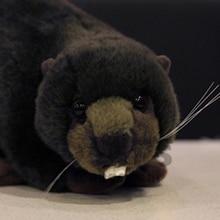 Beaver Simulation Stuffed Plush Toy Animals Cute Pillow Brinquedos Birthday Gift Oyuncak Bebek Toys For Children