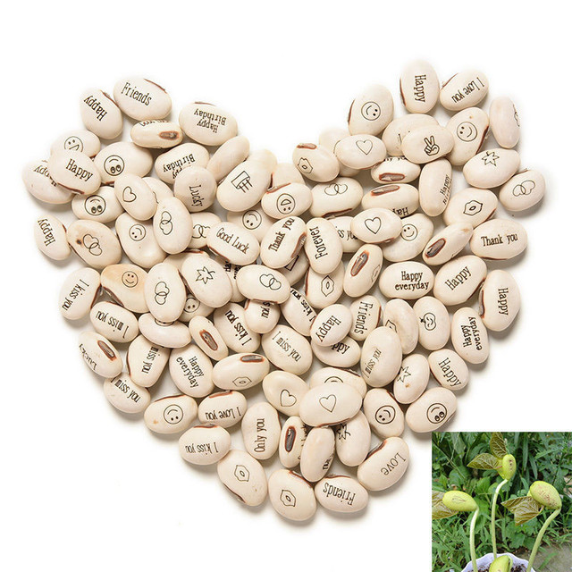 100PCS Magic Growing Message Beans Seeds Magic Bean English Magic Bean Bonsai Green Office Home Decoration Magic Beans 08004