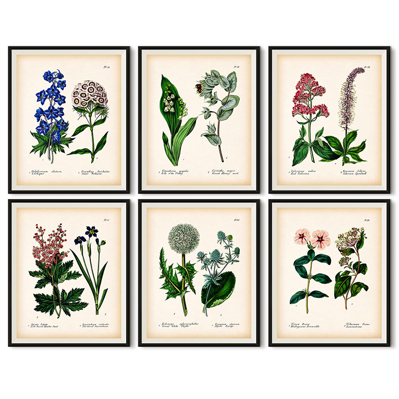 Antique Botanical Canvas Art Posters And Prints , Vintage Botanical Wall Art Painting Pictures For Living Room Home Decor