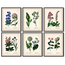 Antiguo lienzo botánico pósteres e impresiones artísticos, Vintage arte de pared botánica pintura cuadros para la decoración del hogar de la sala de estar