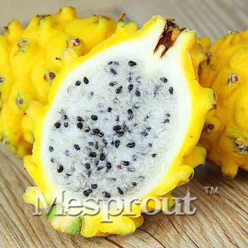 Fruit du dragon arbre promotion achetez des fruit du - Arbre fruit du dragon ...