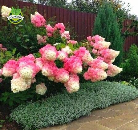 hortensia pot achetez des lots 224 petit prix hortensia pot en provenance de fournisseurs chinois