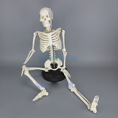 Physique Mini Anatomical Skeleton Human Model Stand Poster Medical Learn Aid Anatomy 85CM mini human uterus assembly model assembled human anatomy model gift for children