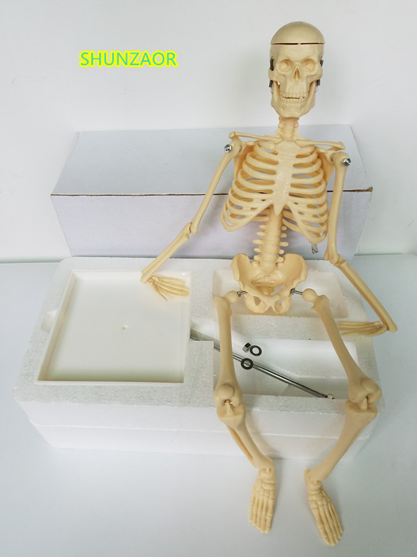 45cm human skeleton model teaching aid  Mini - Skeleton model Learning Resources Human Skeleton Model learning resources набор пирамида из пончиков