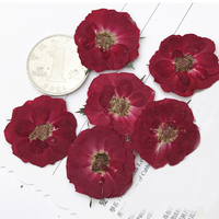 Mini Rose Diameter 2.5CM Red Color Real Pressed Flowers For Teaching Specimens Material Free Shipment 100 Pcs