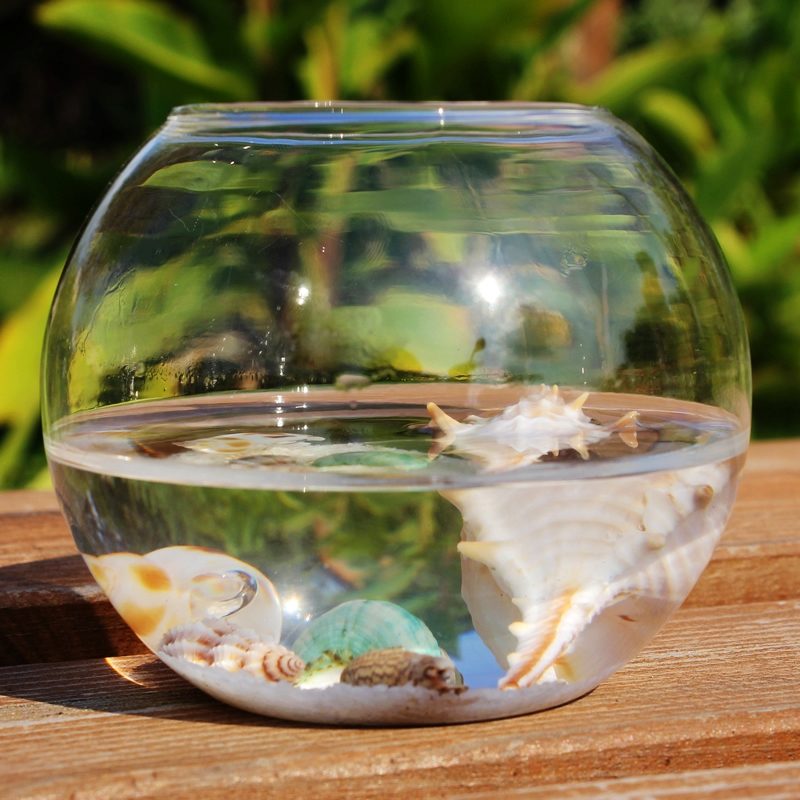 Ball transparent fish tank hydroponics glass vase fleshier for Vase aquarium rond