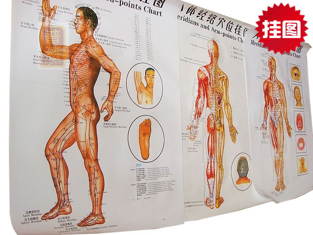 Clear Side Wall Map The Human Body Chart Meridian Points Meridian