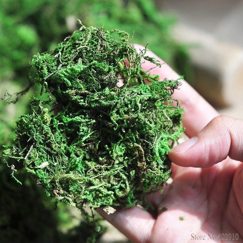 50g/bag Keep dry real green moss decorative plants vase artificial turf silk Flower accessories for flowerpot decoration50g/bag Keep dry real green moss decorative plants vase artificial turf silk Flower accessories for flowerpot decoration
