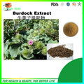 Factory Supply Products Natural Great Burdock Fruit Extract 10:1 400g