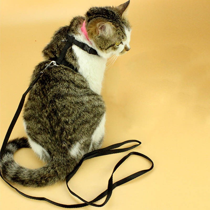 Pet Cat Harness And Leash