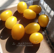 100 Yellow Cherry Tomato Seeds Easiest to grow High Germination Popular Garden Vegetable Seeds Free Shipping