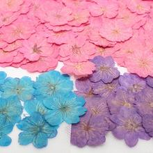 Cherry Blossoms Craft Pressed Flower-Filler Jewelry-Making Dried Epoxy Resin for Postcard-Frame