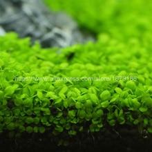 Aquatic Water Grass Mini Leaf Live Plant