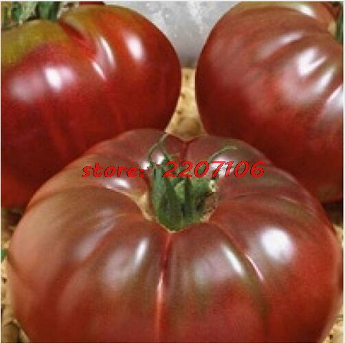 "100 seeds – rare fresh ""Black Prince"" tomato seeds – 100% organic and non – GMO seeds fruits vegetables * free delivery"