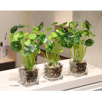 Top Quality Simulation flower fresh Green plant pot Small bonsai Artificial clover Lucky grass potted set Wedding Home Decor