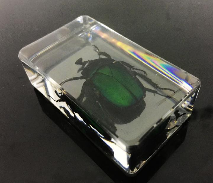 FREE SHIPPING Chinese In Clear Acrylic Lucite Insect Collection Rose Chafer Beetle Paperweight